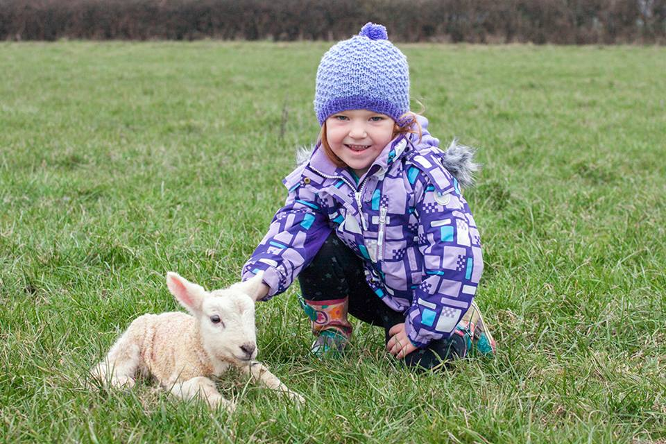 Lambing Season at Lolfa